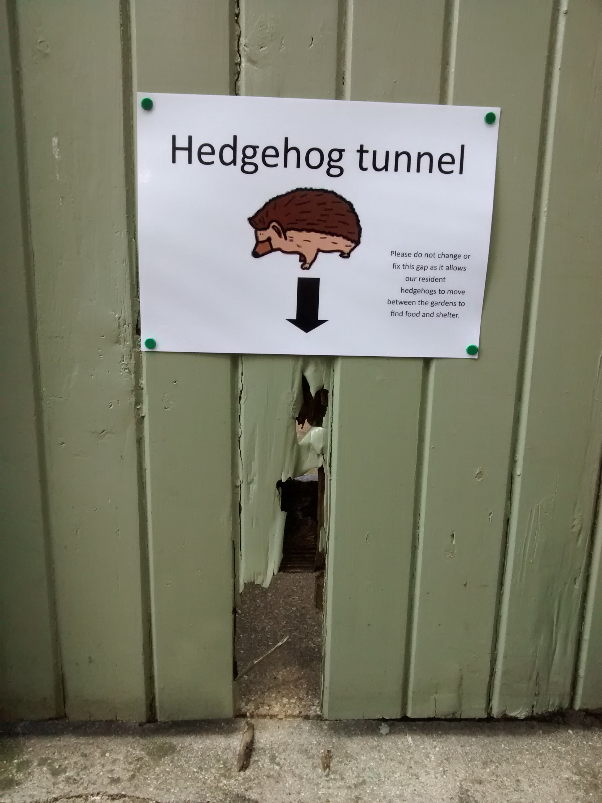 Hedgehog tunnel