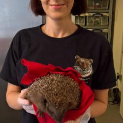 Read more at: Wildlife heroes – Making a home for hedgehogs