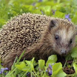 Read more at: Biodiversity across the University